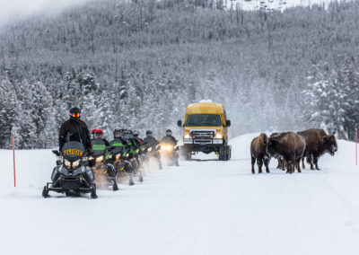 Snowmobiles and Snow coaches passing bison on the road